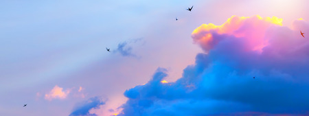 abstract spring sky background; flight birds in pink clouds  Stock Photo