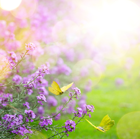 spring flower and butterfly; abstract spring Background;