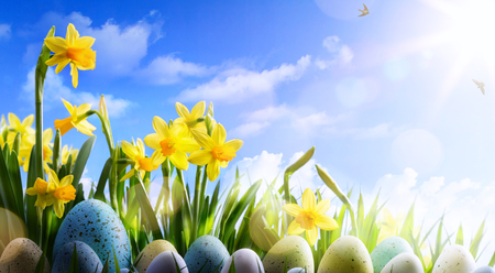 Easter background; Spring flowers and easter eggs  Stock Photo