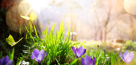 abstract nature spring Background; spring flower and butterfly   Stock Photo