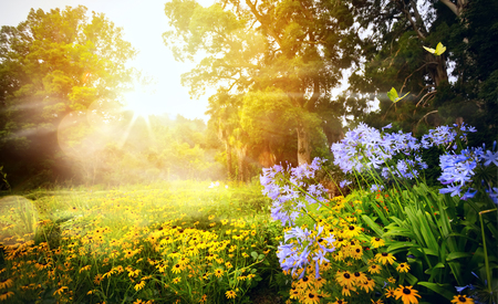 beautiful summer landscape; sunset in the floral park
