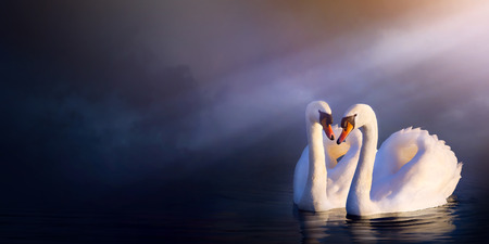 beautiful romance landscape; love couple white swan