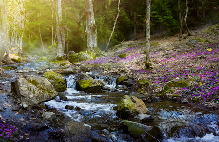Blooming spring forest; Mountain stream and spring flowers