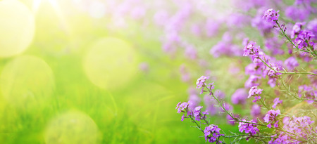 abstract spring floral Background; spring flower and sunny beam
