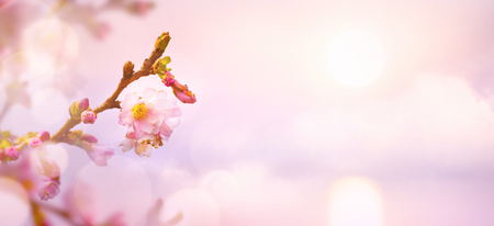 abstract Spring flower background; Easter landscape