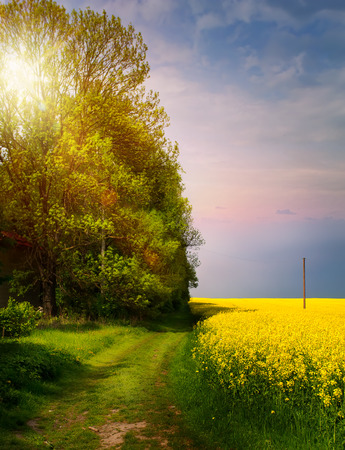spring countryside landscape; sunrise over blooming yellow field Reklamní fotografie