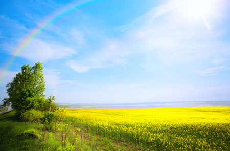 spring landscape background; yellow flower and blue sky Reklamní fotografie