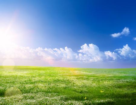 spring landscape background; spring flowering and blue sunny sky