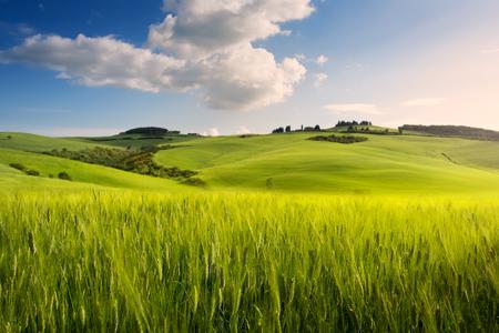 Spring farmland;  tuscany countryside rolling hills
