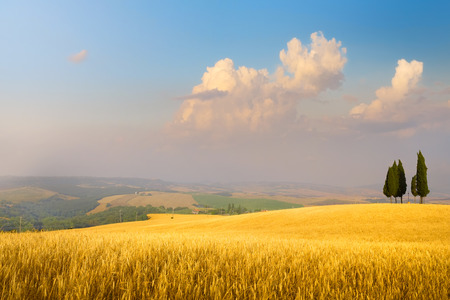 Italian summer countryside landscape – golden fields and blue sky Imagens
