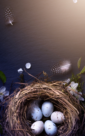 Happy Easter;  Easter eggs in nest and spring flower on table background