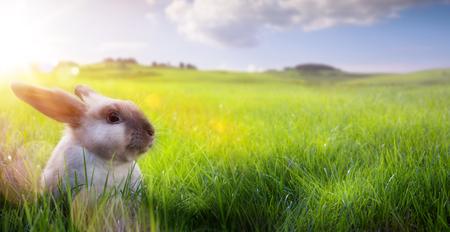 Happy Easter – Easter Bunny on sunny Flowering spring Field   Reklamní fotografie