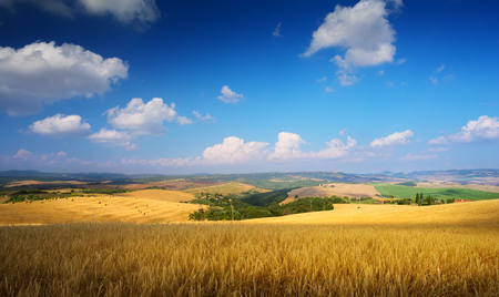 countryside Landscape; summer Tuscany field Stockfoto