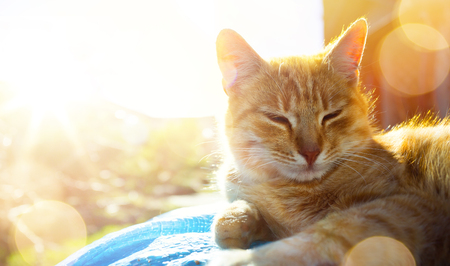 relaxed and happy cat gets pleasure basking in the spring sun