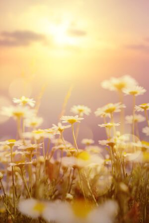 Art abstract  natural background; summer sunny meadow Stockfoto