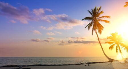 summer  vacation background; Palm tree on a tropical beach sunset Stockfoto