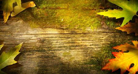 art autumn background; maple leaf on old wooden background    Stockfoto