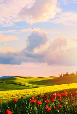 Sunset over the Tuscany countryside landscape; Typical Italy;