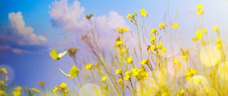 Yellow flowers On Field - Abstract autumn Landscape Stok Fotoğraf