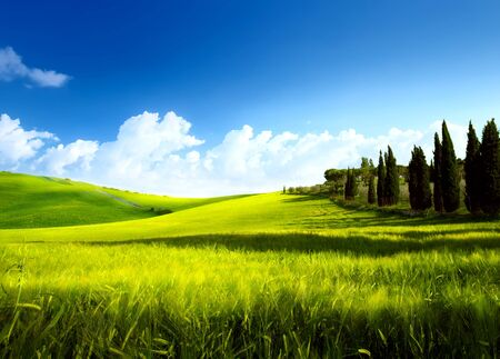 spring rural landscape with beautiful farm field and cypress trees Stockfoto