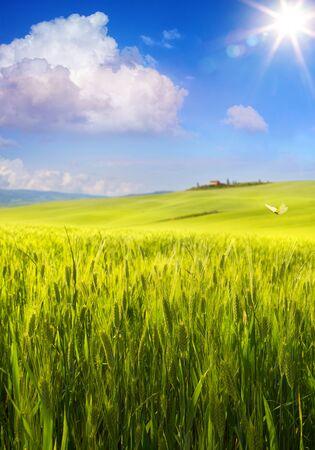 Beautiful Italy summer countryside landscape, green farmland over blue sunny sky  版權商用圖片