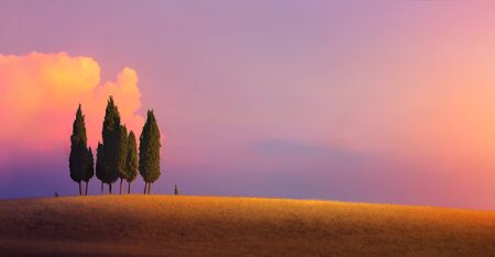Beautiful Italy nature countryside landscape; farm field and cypress trees over sunset sky