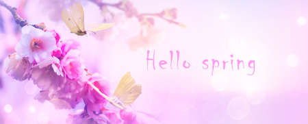 Hello spring banner; spring flowers and flying butterflies on the Sunrise sky background