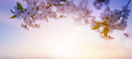 Abstract blurred beautiful spring background with flowering tree branch against sunrise sky background