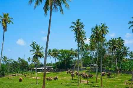 orphanage: beautiful view of pinnawala elephant orphanage