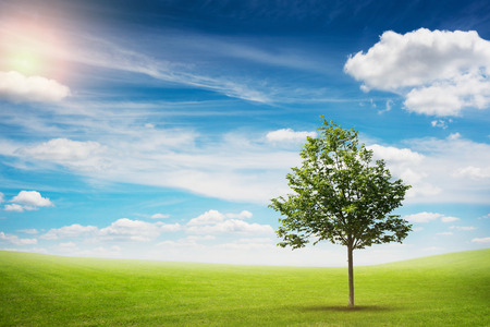 lawn grass: beautiful landscape of lonely tree on the green meadow over blue sky with clouds