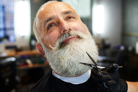 grey haired: closeup portrait of bearded senior man in barber shop. barber cutting beard with scissors