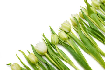 Side top view of a spring tulips. Line of tulips arranged over flat lay. lace for a copy space isolated over white flat lay Stock Photo