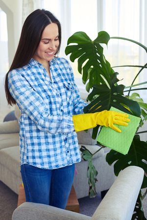 Mid shot of good-looking charwoman in gloves cleaning leaves of houseplant Stock Photo