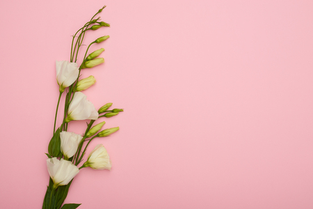 White eustoma with buds placed on pink desk