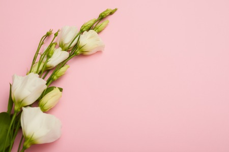 Branch of white blossoming eustoma on pink flatlay