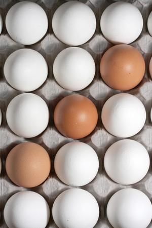 origen animal: Los huevos se encuentran en el soporte de cartón Foto de archivo