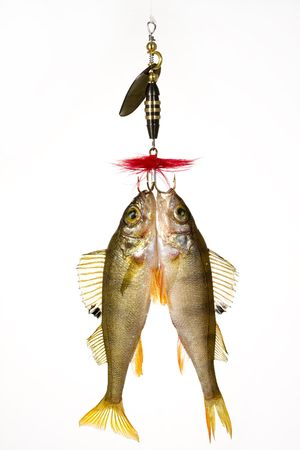 Fish on the hook Stock Photo - 4680412