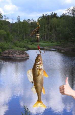 Fish on the hook Stock Photo - 4680407