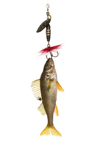 Fish on the hook Stock Photo - 4680358