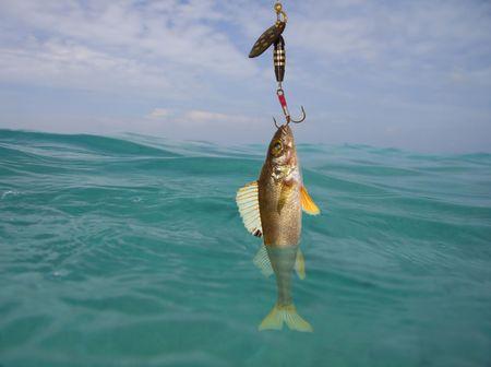 fish hook: Fish on the hook Stock Photo