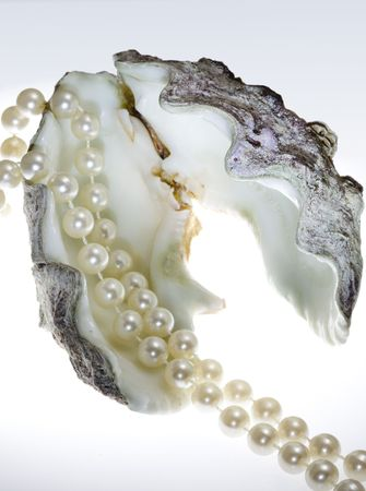 Strand of pearls lays in shell photo