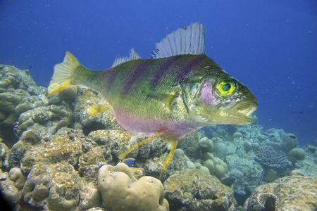 Fish, being floating on background of corals Stock Photo - 5725459