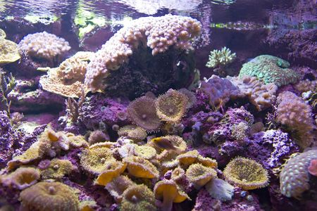 Multi-coloured tropical corals under water Stock Photo - 5952312