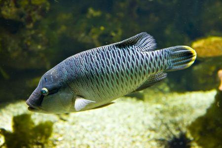 The big tropical fish Stock Photo - 5952279