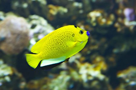 Tropical small fish against corals Stock Photo - 5952275