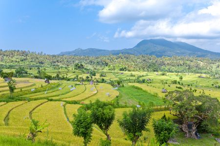 Kind on rice terraces, Bali, Indonesia Stock Photo - 6053060