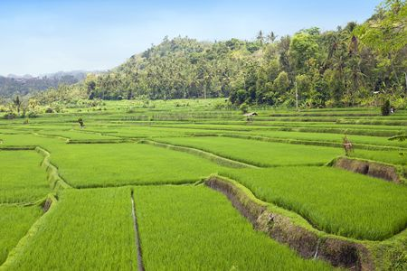 Kind on rice terraces, Bali, Indonesia Stock Photo - 6517435
