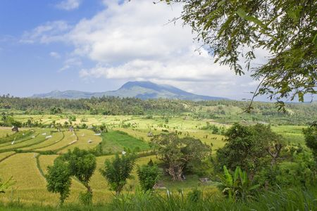 Kind on rice terraces, Bali, Indonesia Stock Photo - 6517434