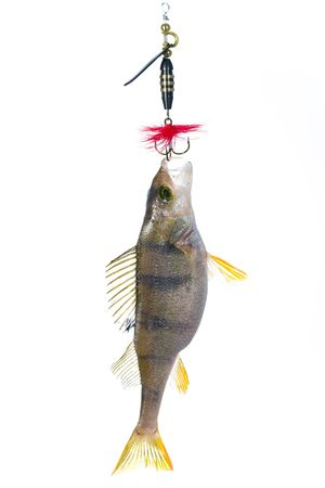 Fish on the hook Stock Photo - 6770839