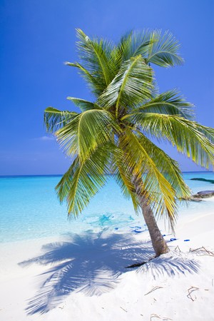 Maldives.  Palm tree bent above waters of ocean.   photo